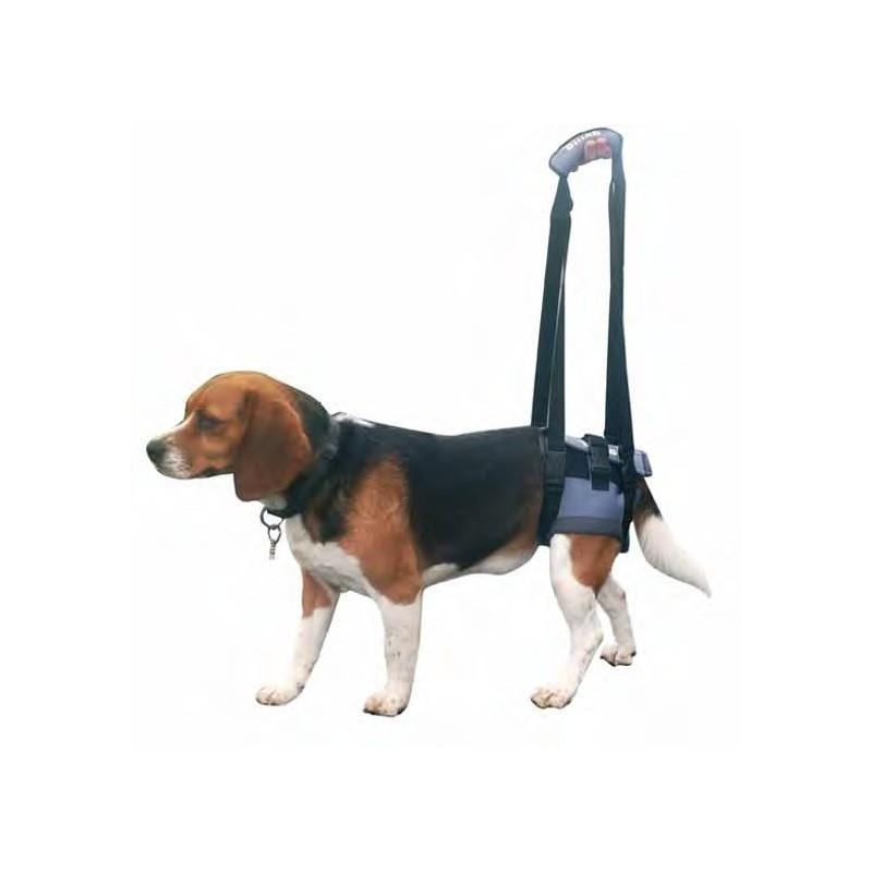 botas ortopedicas para perros